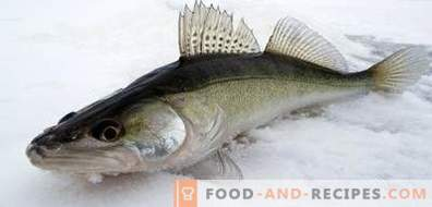 Pike perch: benefits and harm to the body