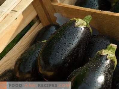Auberginen: Nutzen für die Gesundheit und Schaden